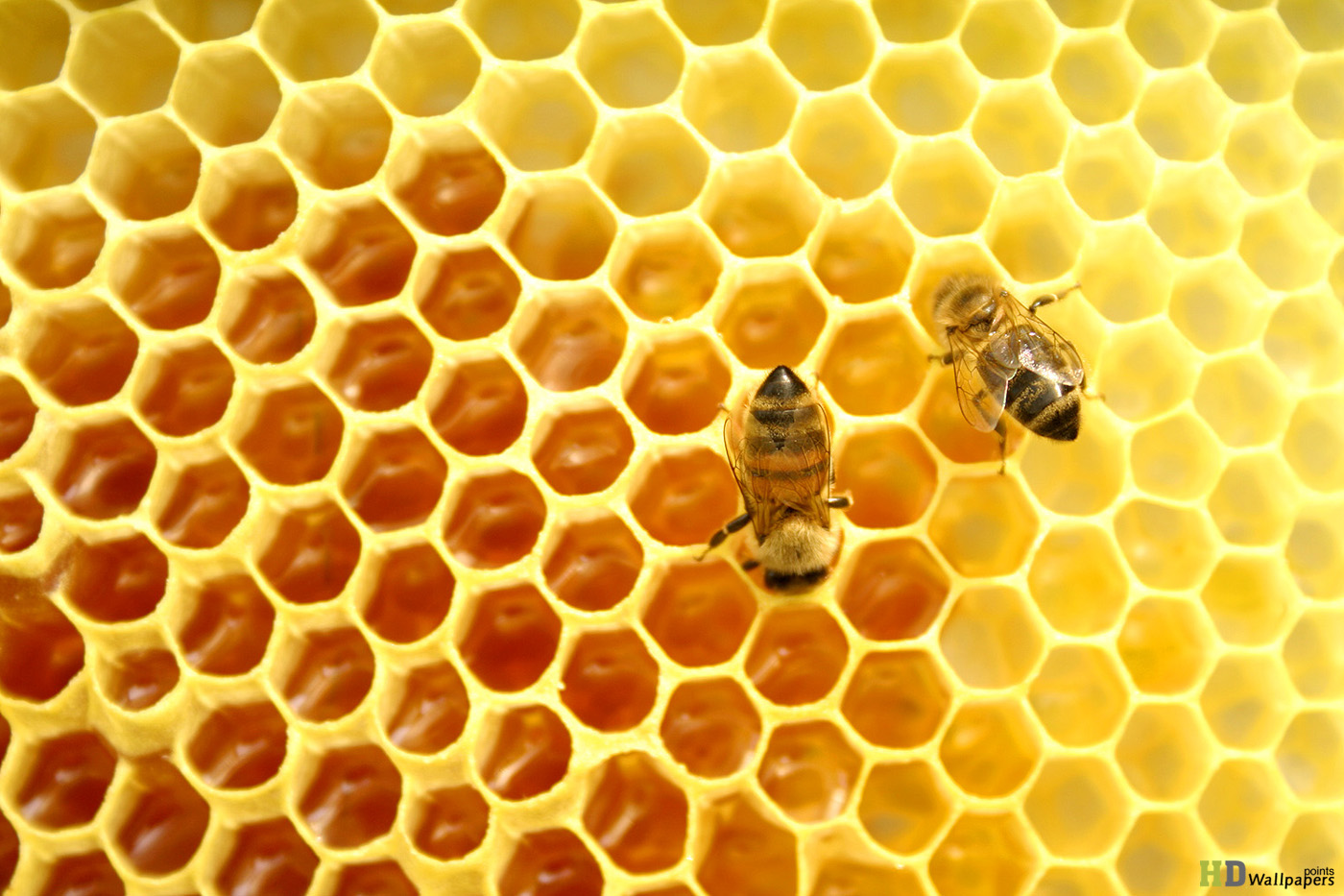 Visit Our Apiary!